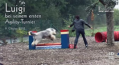 Luigis Videos: Agility-Turnier