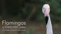 Video Flamingos